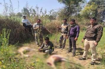 Wildlife Chital का शिकारी गिरफ्तार