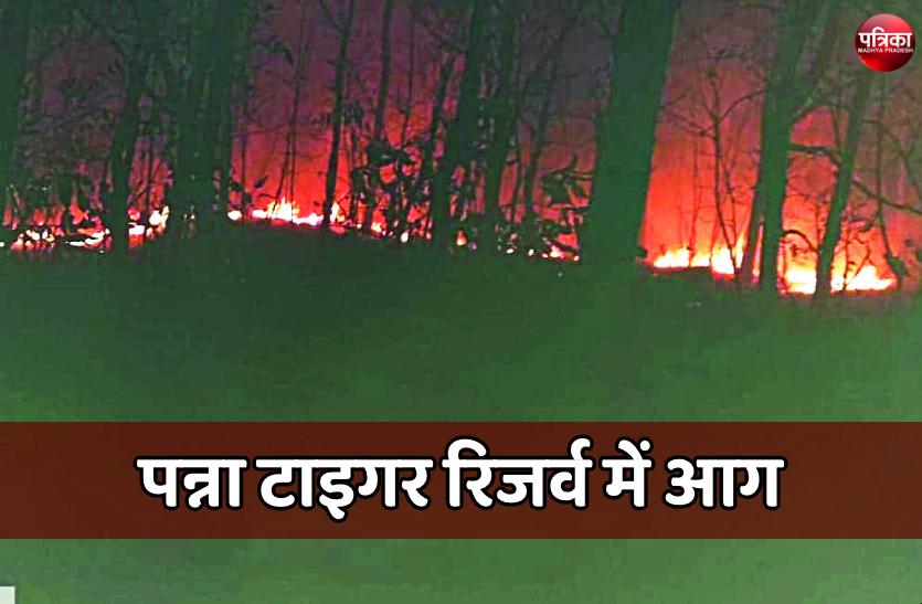 पन्ना टाइगर रिजर्व के बफर क्षेत्र में लगी आग, छह घंटे बाद पाया काबू