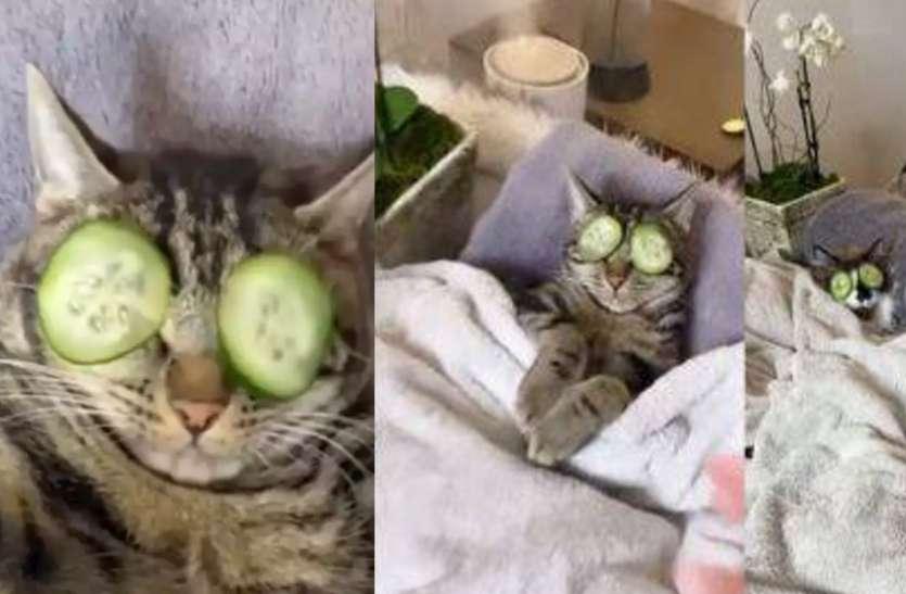 Video : पति के साथ स्पा ले रही थी बिल्ली, महिला ने की ऐसी हरकत, बिल्ली ने मारा झपट्टा