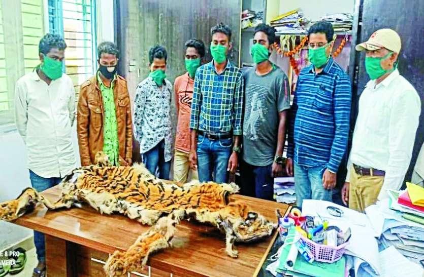 शिवरात्रि पर तांत्रिक पूजा करने 5 पुलिस और 2 स्वास्थ्य कर्मियों ने मंगाई बाघ की खाल