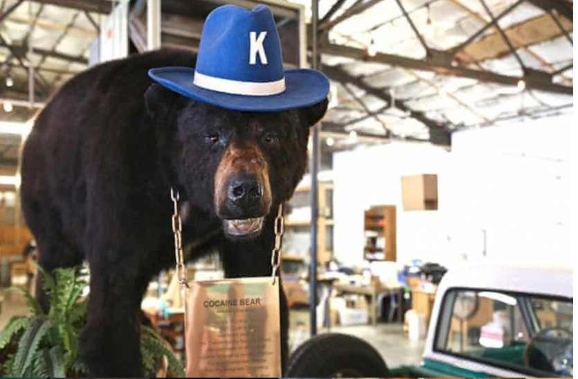 भालू खा गया 30 किलो कोकेन, फिर हुआ कुछ ऐसा, अब बनेगी फिल्म