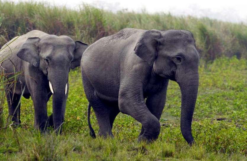जंगली हाथियों को रोकने के लिए तमिलनाडु मॉडल अपनाएगी कर्नाटक सरकार