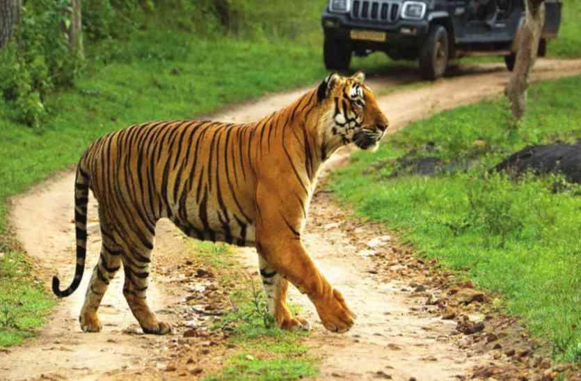 डुमना की टाइगर सफारी पर बड़ी खबर, खतरे में पड़ जाएगा वन्य जीवन