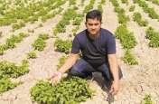 बिहार में 85 हजार रुपए किलो वाली सब्जी
