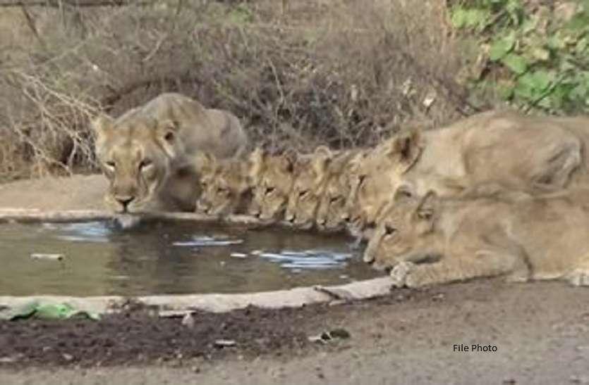अब पानी के लिए नहीं भटकेंगे शेर