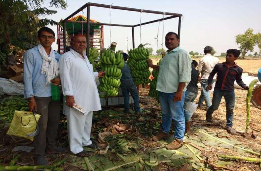 केले की खेती अब ऑर्गेनिक तरीके से करने में जुटे किसान
