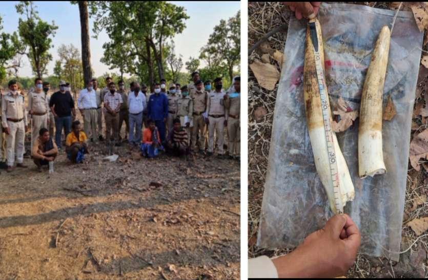 पहाड़ से गिरकर हाथी की मौत के बाद दोनों दांत काटकर ले गए थे आरोपी, मैनपाट से 3 गिरफ्तार