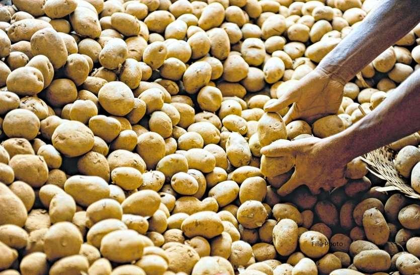 आलू का उत्पादन बढ़ा, दाम घटे, संकट में उत्पादक