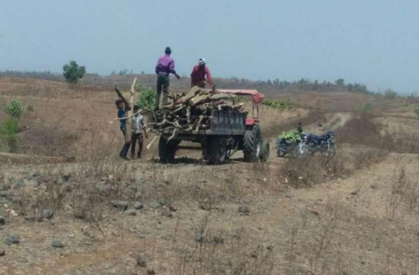 रीवा वृत्त में वन अपराध से जुड़ी आठ हजार से अधिक शिकायतों की जांच लंबित
