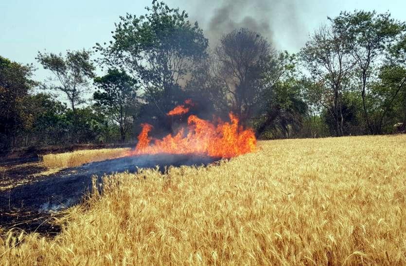 13-14 एकड़ खेत में खड़ी फसल जलकर खाक
