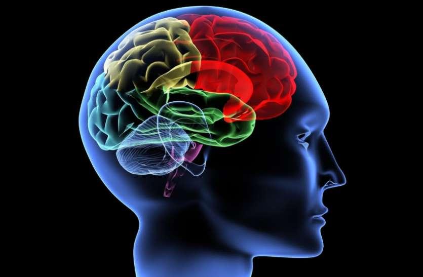 वैज्ञानिकों ने 3D प्रिंटेड बॉयोरिएक्टर में बनाए ब्रेन टिश्यूज, दिमाग से जुड़ी बीमारियों पर हो सकेगा शोध
