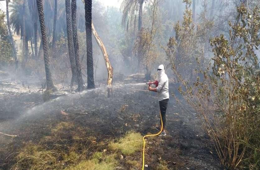 जरा सी लापरवाही से खजूर के दो सौ पेड़ जले