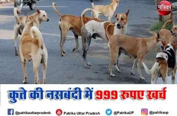 वाह भाई, राजधानी लखनऊ में गोवंश घूमेंगे आवारा, कुत्तों की नसबंदी पर खर्च होंगे सात करोड़ रुपए