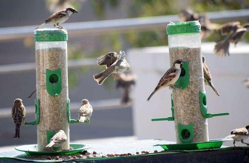 birds in hot summer
