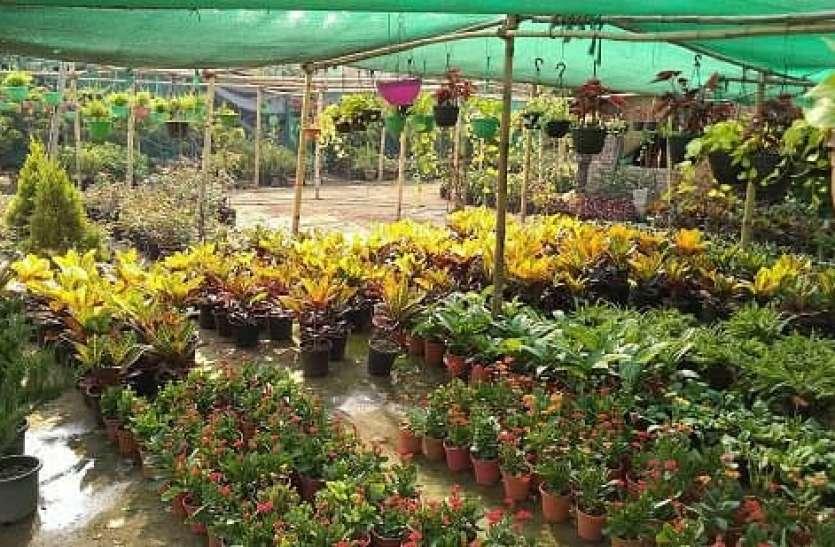 अब ऑनलाइन हुई पौधों की नर्सरी, अब घर के आसपास ही मिल सकेंगे फूलों और फलों के पौधे