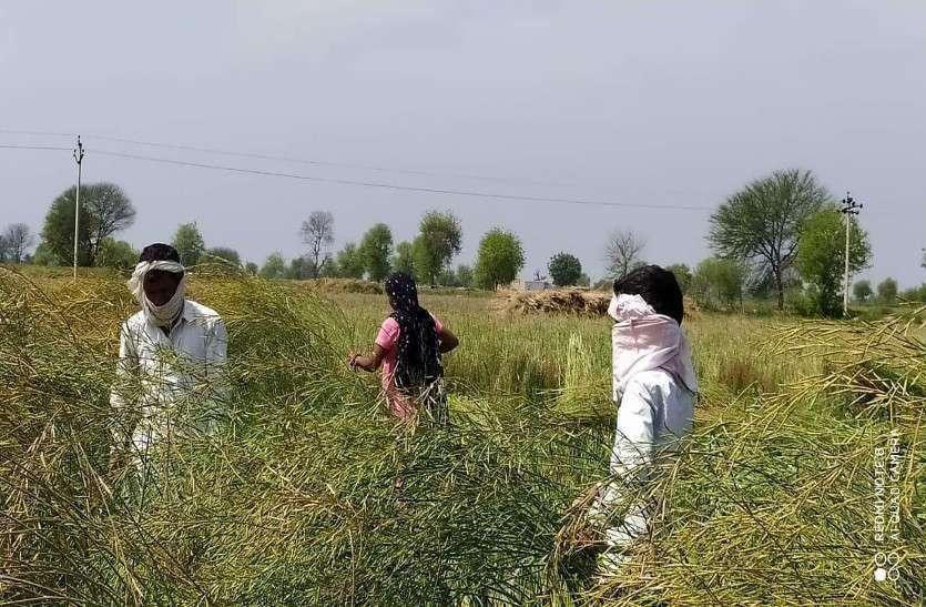 श्रीगंगानगर जिले में श्रमिकों का मनरेगा से मोहभंग