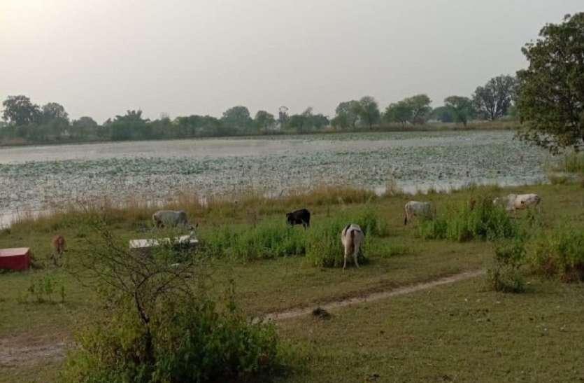 कूट रचना कर भरे तालाब भूमि की कराई गई थी रजिस्ट्री, नामांतरण रोका