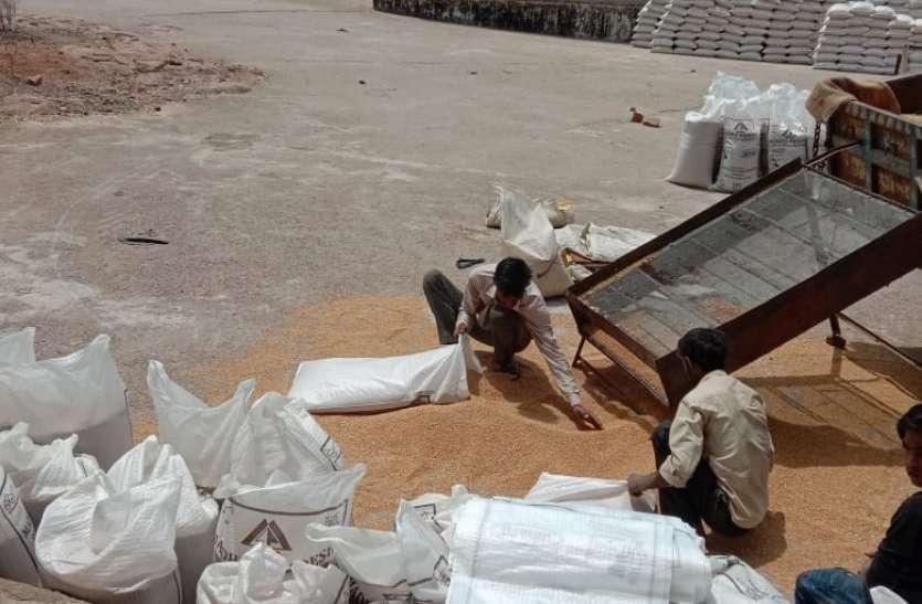 खरीद लक्ष्य को पूरा करने भर रहे गोदाम, जबकि पिछले वर्ष का आज भी रखा ११ लाख क्विंटल गेहूं