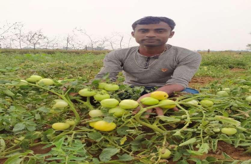 लॉकडाउन ने तोड़ी सब्जी उत्पादक किसानों की कमर