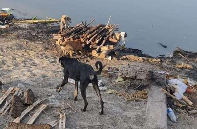 मानवता को किया शर्मसार अधजला शव छोड़ भागे थे परिवारजन, शव को कुत्ते नोचते रहे