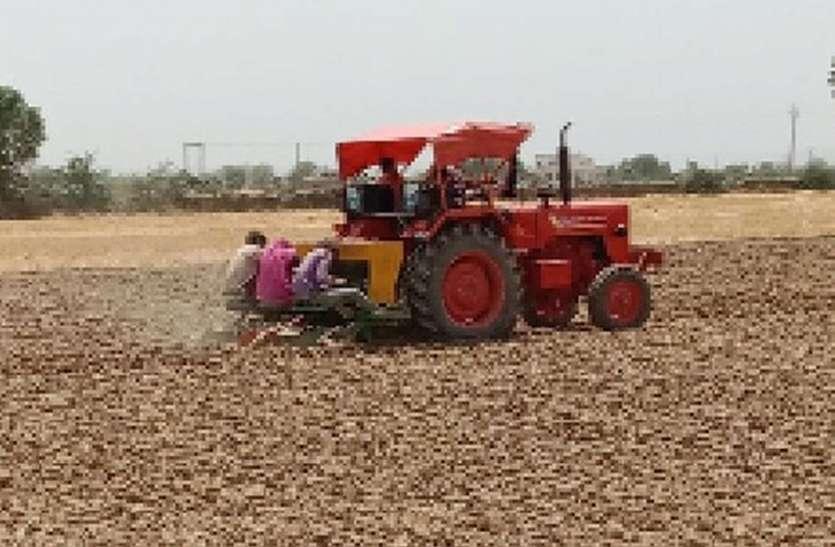 किसानों का अरबी की ओर बढ़ा रुझान