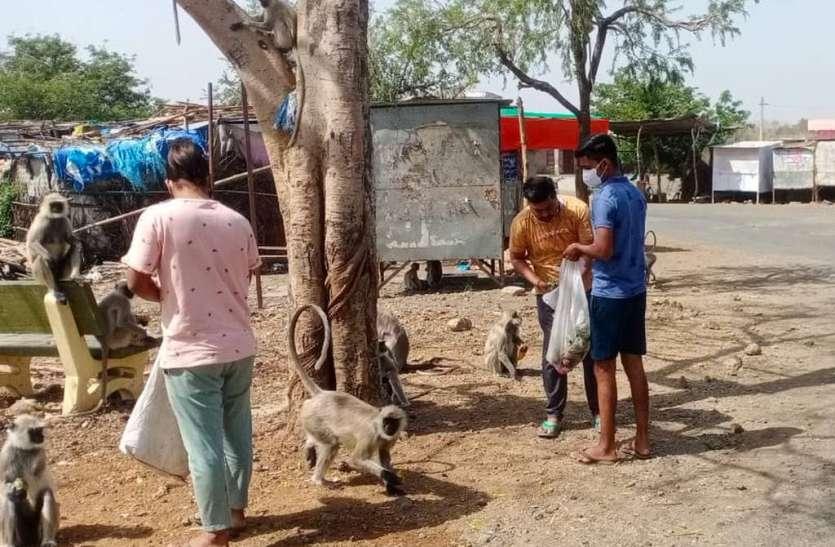 युवा टीम अरनोद ने गौतमेश्वर में गायों, बंदरों को सब्जी, फल एवं रोटियों की व्यवस्था की