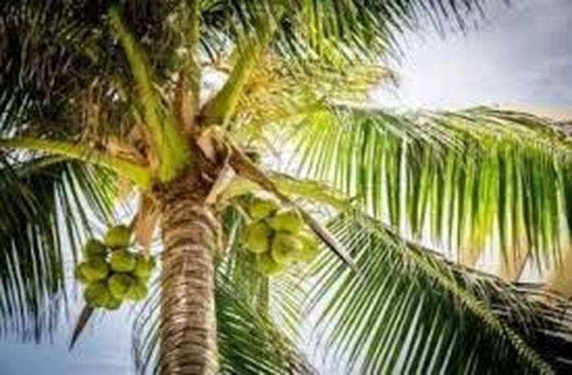 ये कोरोना का ही असर है कि आज आपे से बाहर हैं नारियल, कीवी, सेब और नींबू