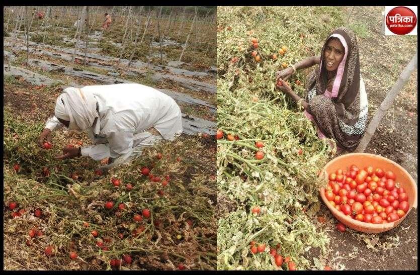 कोरोना का कहर : सब्जी उत्पादक किसानों को हो रहा आर्थिक नुकसान