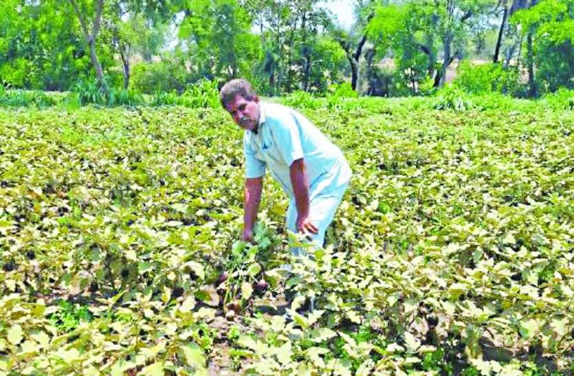 Corona curfew side effects: भाव न मिलने के गम में किसान, खेतों से नहीं तोड़ पा रहे सब्जियां