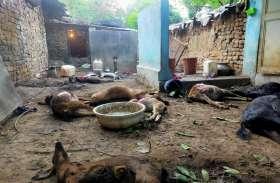 2 शावकों के साथ बस्ती में घुसे तेंदुए का आतंक, बाड़े में बंधी 12 बकरियों को मार डाला, ग्रामीणों में दहशत