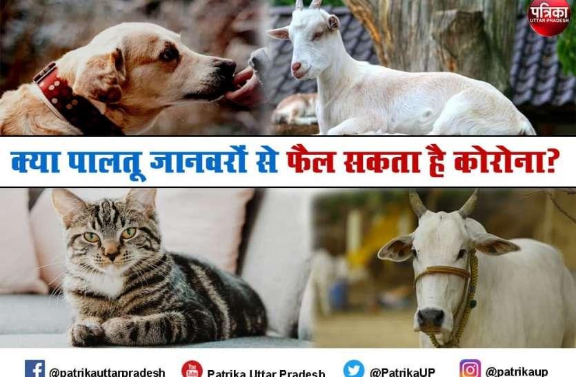 Coronavirus infection in Pets : आपके पालतू जानवरों पर भी मंडरा रहा कोरोना का खतरा? जानें- क्या है चिकित्सकों की सलाह