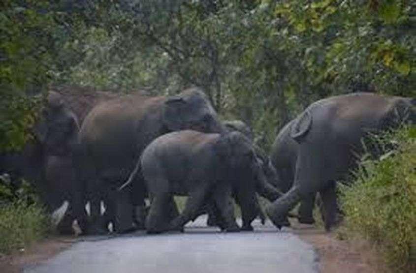 हाथियों को खदेडऩे के प्रयास में वनकर्मी की मौत