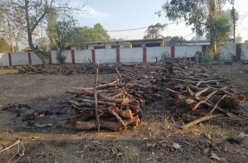 वनविभाग ने कोतमा और बिजुरी के लिए 10-10 क्विंटल जलाऊ लकड़ी की बनाई व्यवस्था