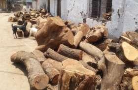 अचानक बढ़ी अंतिम संस्कार की लकड़ी की खपत, पिछले आठ दिन में 14 मौते दर्ज