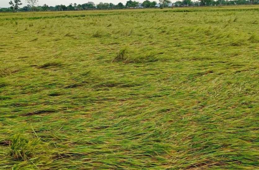 बारिश-ओलावृष्टि से रबी फसल बर्बाद, किसानों ने मांगा मुआवजा
