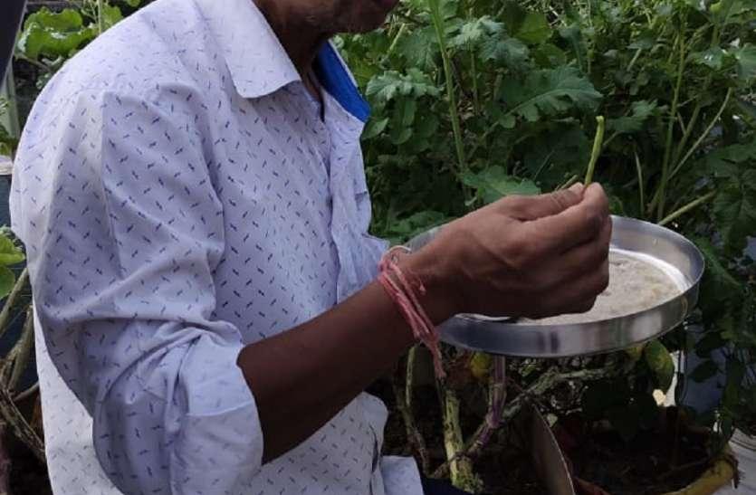 लॉकडाउन लगा तो घर की छत पर ही उगा दी सब्जियां, पिछले एक साल से बाजार से नहीं खरीदी सब्जियां