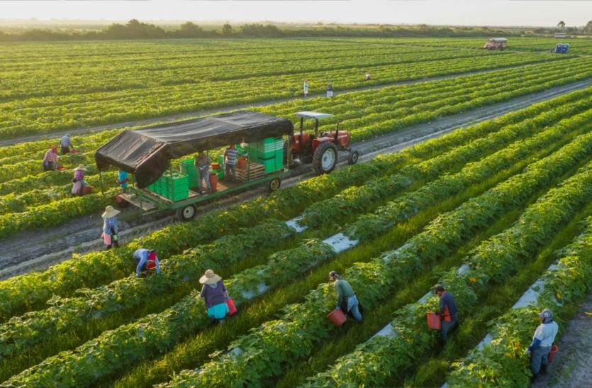 कृषि : मिले जैविक खेती को प्रोत्साहन