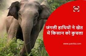 जंगली हाथी ने खेत में किसान को कुचला, बेटे ने पेड़ पर चढ़कर बचाई जान