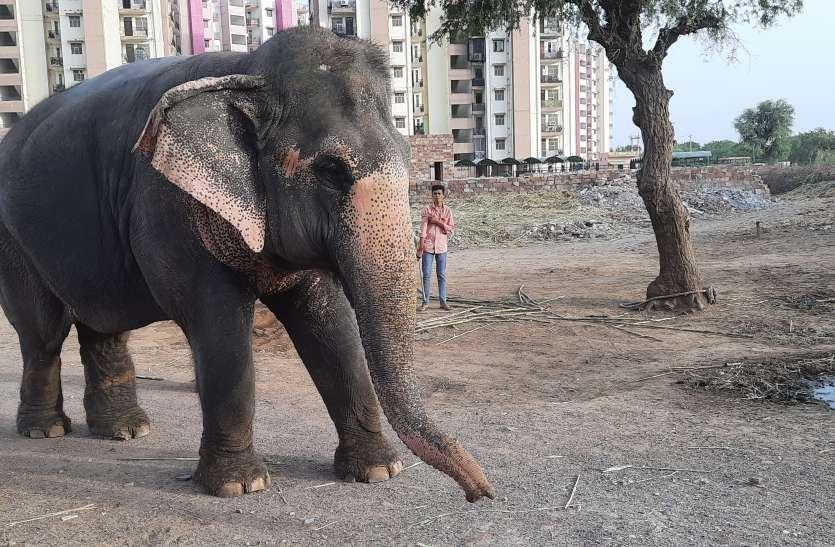 लॉकडाउन से मुश्किल में है गंगा का जीवन...