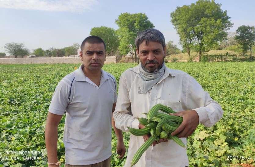 कोरोना काल में नौकरी का साथ छूटा तो उदयपुर के इस युवा ने ऑर्गेनिक खेती का थामा दामन