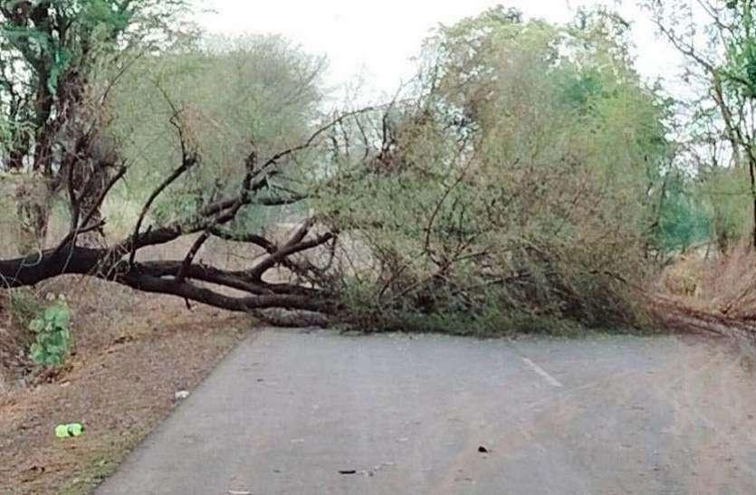 Cyclone..झालावाड़ में तूफान ने दी दस्तक,मचाई तबाही,कई पेड़ गिरे