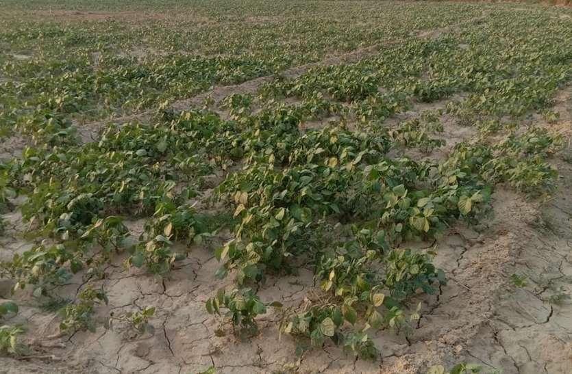 कोरोना कर्फ्यू के बाद डीएपी तोड़ेगी किसानों की कमर