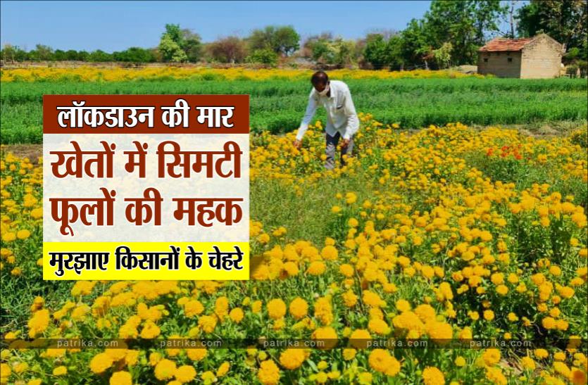 लॉकडाउन की मार : खेतों में सिमटी फूलों की महक, मुरझाए किसानों के चेहरे