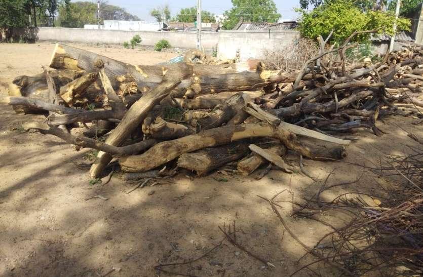 Gujarat: जोरावर पैलेस से सूखे पेड़ की लकडिय़ां भेजी श्मशान