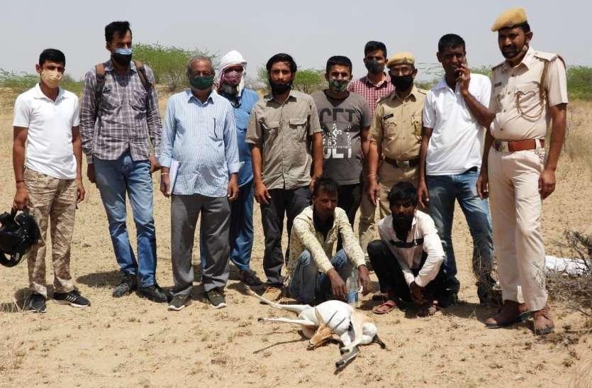 चिंकारा हरिण शिकार के आरोप में दो गिरफ्तार