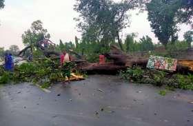 आंधी-तूफान के साथ हुई बारिश, कई पेड़ और विद्युत पोल धराशायी- देखें Video