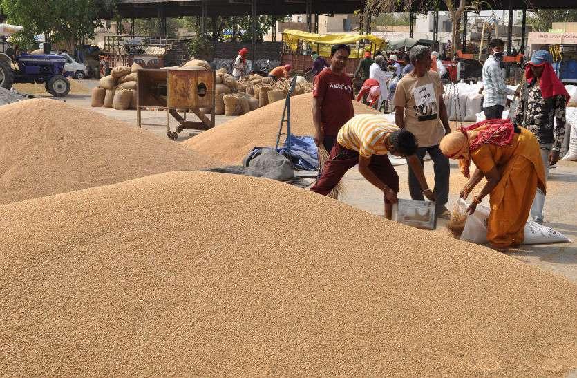 दो माह में 51.05 लाख मीट्रिक टन गेहूं खरीद पर 11.54 लाख किसानों को 10082.99 करोड़ का भुगतान