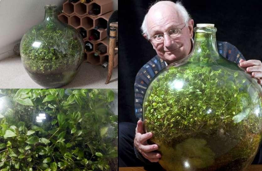 61 साल पुराना 'बोतल गार्डन', 40 साल से नहीं पड़ी पानी की एक बूँद, फिर भी हरा भरा