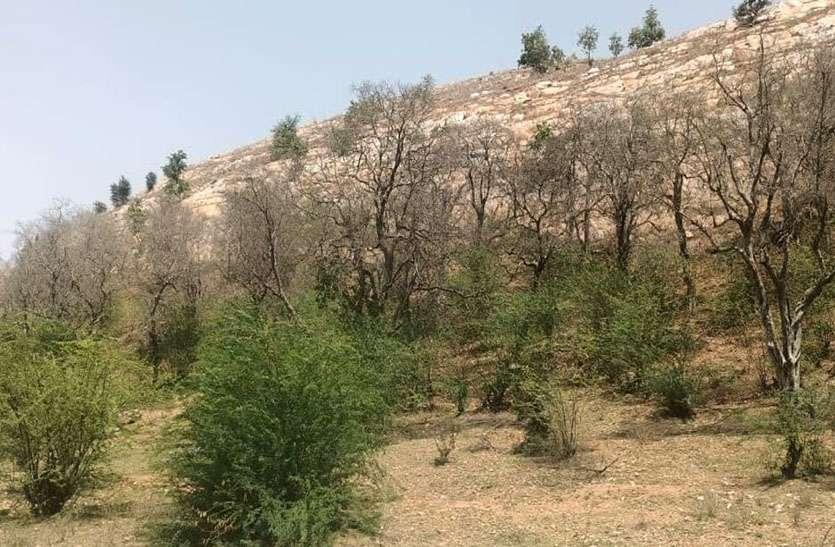 कदम्ब के वृक्षों से बनी कांटोली की पहचान