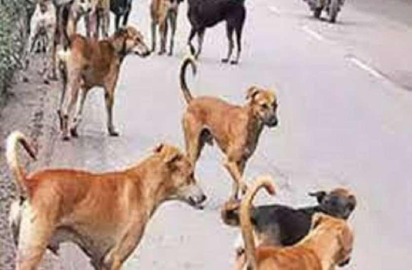 दमकल केन्द्र आवारा जानवरों के लिए मुहैया कराएंगे खाना